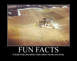 Fun-facts-23