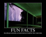 Fun-facts-31