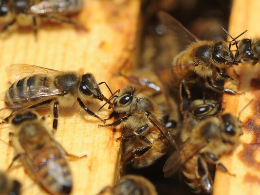 1374943259000-AP-Boosting-Beekeepers-1307271243_4_3